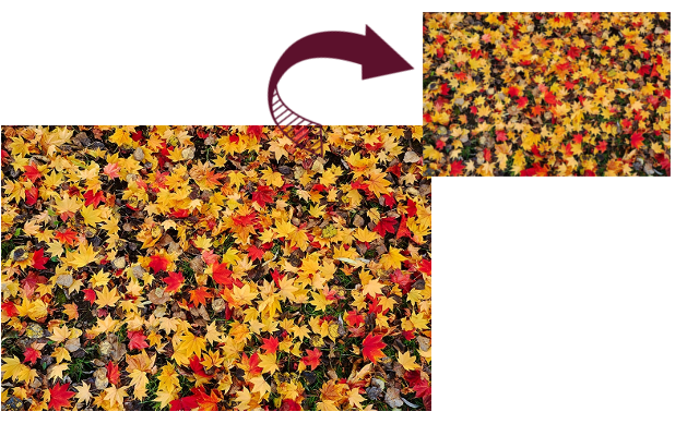 画像・写真のサイズ変更方法